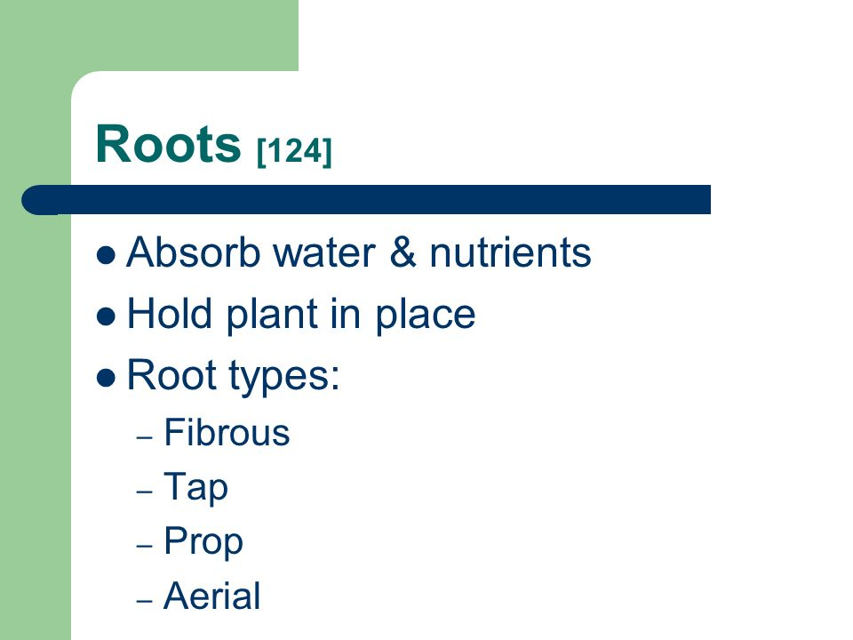 Roots [124] Absorb water & nutrients Hold plant in place Root types: